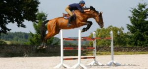 Saut cheval credit-photo-franck-papelard