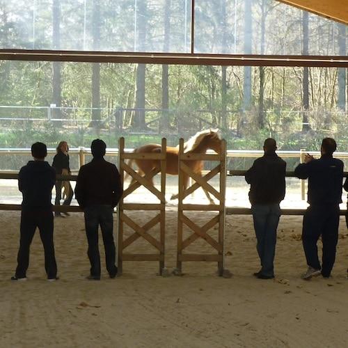 Horse coaching Muriel