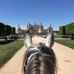Loire oreilles