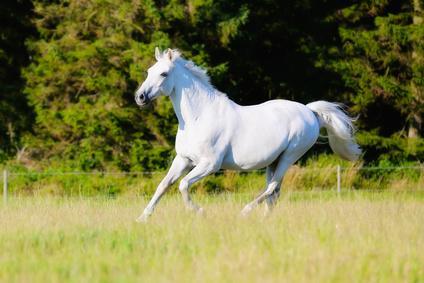 Horse Holidays - Covid-19
