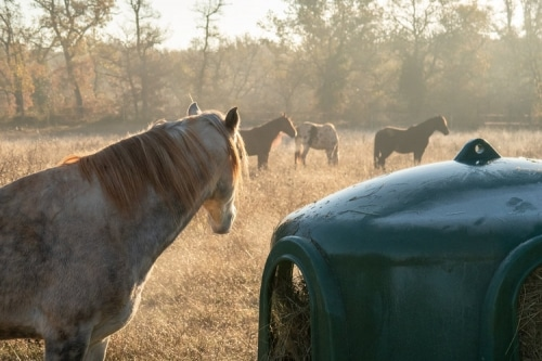 chevaux-mas-de-peyrelongue