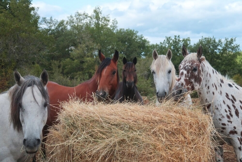 chevaux_peyrelongue